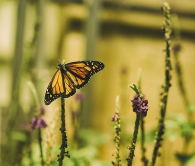How butterfly network helped me stop anxiety in 2017